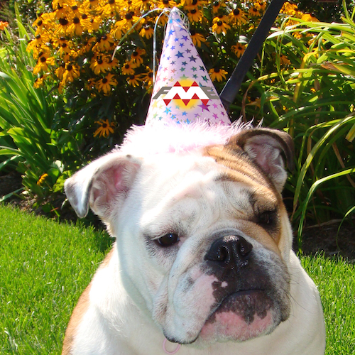 Dog wearing FME party hat