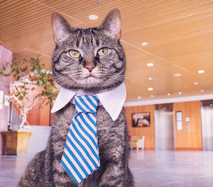 Cat at job interview